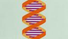 Powerful enzyme could make CRISPR gene-editing more versatile
