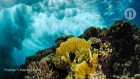 Sea-level rise could overwhelm coral reefs
