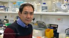 Sacked Japanese biologist gets chance to retrain at Crick institute