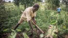 Big-data project aims to transform farming in world's poorest countries