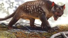 Climate change implicated in marsupial-lion extinction