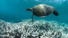 Coral scientists decry loss of funding for leading Australian reef institute