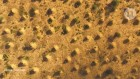 Termite mounds dating back millennia can be seen from space