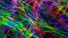 Matrix mimics shape cell studies
