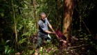 Tree sleuths are using DNA tests and machine vision to crack timber crimes
