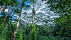 World's largest plant survey reveals alarming extinction rate