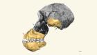 Elusive cranium of early hominin found