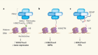 Inhibitory protein puts a lid on an epigenetic marker