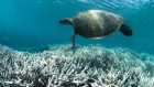 Save reefs to rescue all ecosystems