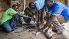 Exclusive: Battle to wipe out debilitating Guinea worm parasite hits 10 year delay