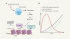 Histone lactylation links metabolism and gene regulation