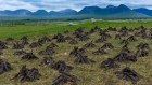 Humans are drying out Europe's ancient peat bogs