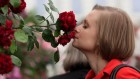 The women who lack an odour-related brain area — and can still smell a rose