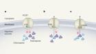 Malaria parasites fine-tune mutations to resist drugs