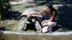 Reptiles known as 'living rocks' show surprising cognitive powers