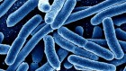 Machine learning leads to speedy screening for drug-resistant microbes