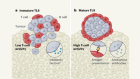 New predictors for immunotherapy responses sharpen our view of the tumour microenvironment