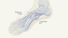 Ahead of the curve in the evolution of human feet