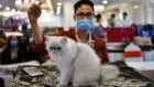 Coronavirus can infect cats — dogs, not so much