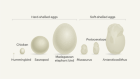 Hard evidence from soft fossil eggs