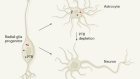 Method to combat Parkinson's disease by astrocyte-to-neuron conversion