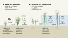Genetic drivers of high-rise rice that survives deep floods