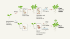 Growth-mediated sensing of long-term cold in plants
