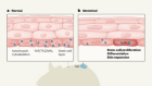 Stretch exercises for stem cells expand the skin