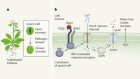 Calcium channel in plants helps shut the door on intruders