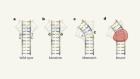 DNA-binding proteins meet their mismatch