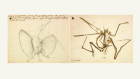 Closest relatives found for pterosaurs, the first flying vertebrates