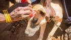 Data helps an anti-rabies campaign go to the dogs