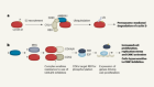 The path to destruction for D-type cyclin proteins
