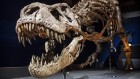How many T. rex ever existed? Calculation of dinosaur's abundance offers an answer