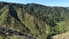 Controversial forestry experiment will be largest-ever in United States