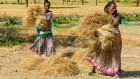 Mapping micronutrients in grain and soil unearths hidden hunger in Africa