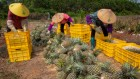 Poor harvest: farmers earn a pitiful fraction of the money spent on food