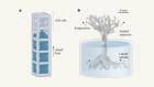 Programmable capillary action controls fluid flows