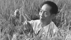 Yuan Longping (1930–2021)