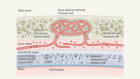 Private immune protection at the border of the central nervous system