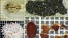 The guts of a 'bog body' reveal sacrificed man's final meal