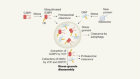 Ubiquitin protein helps cells to recover from stress