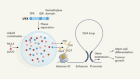 Protein condensates provide a platform for controlling chromatin