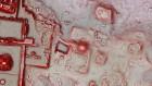Ancient Maya capital housed a copy of a rival city's pyramid