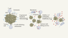 Bacteria recycle tumour waste to fuel immune cells