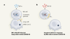Clues that natural killer cells help to control COVID