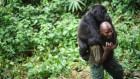 Congo Basin rainforest — invest US$150 million in science