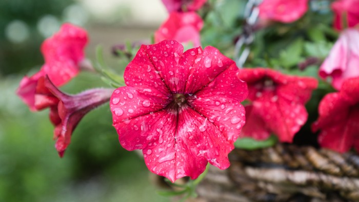 Scent molecules are released from petunia flowers by a membrane protein.