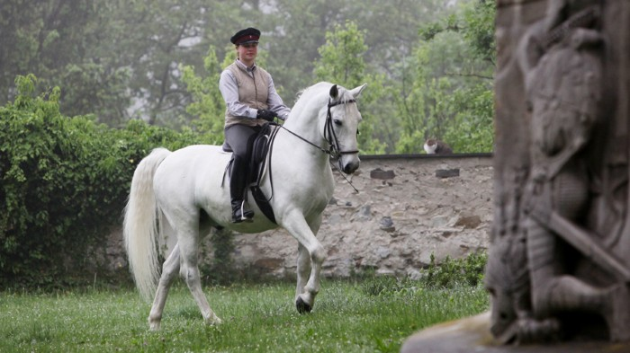 This Lipizzan stallion is among the many modern breeds to have roots in the East.