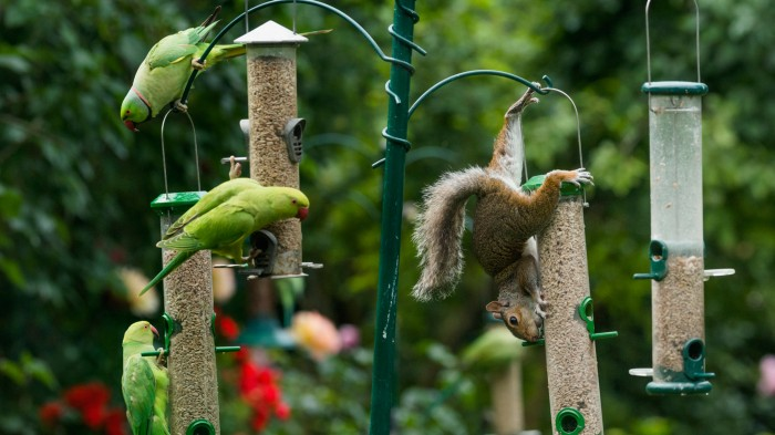 Invasive squirrels and parakeets are thriving in some parts of Europe.